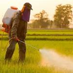Spraying Pesticides.jpg