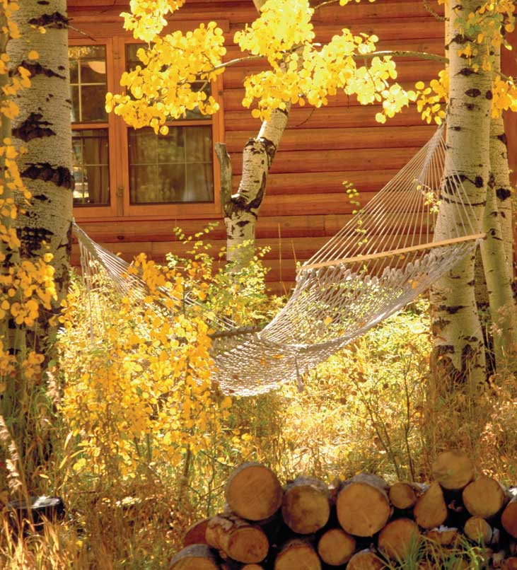 Leaves surround a hammock