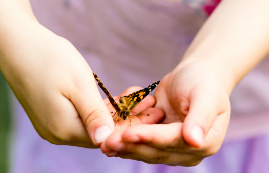 Photograph of child's hands holding a Painted Lady butterfly.